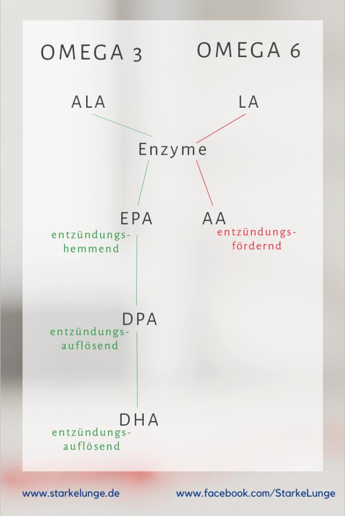 Das richtige Verhältnis von Omega 3 und Omega 6 ist wichtig.